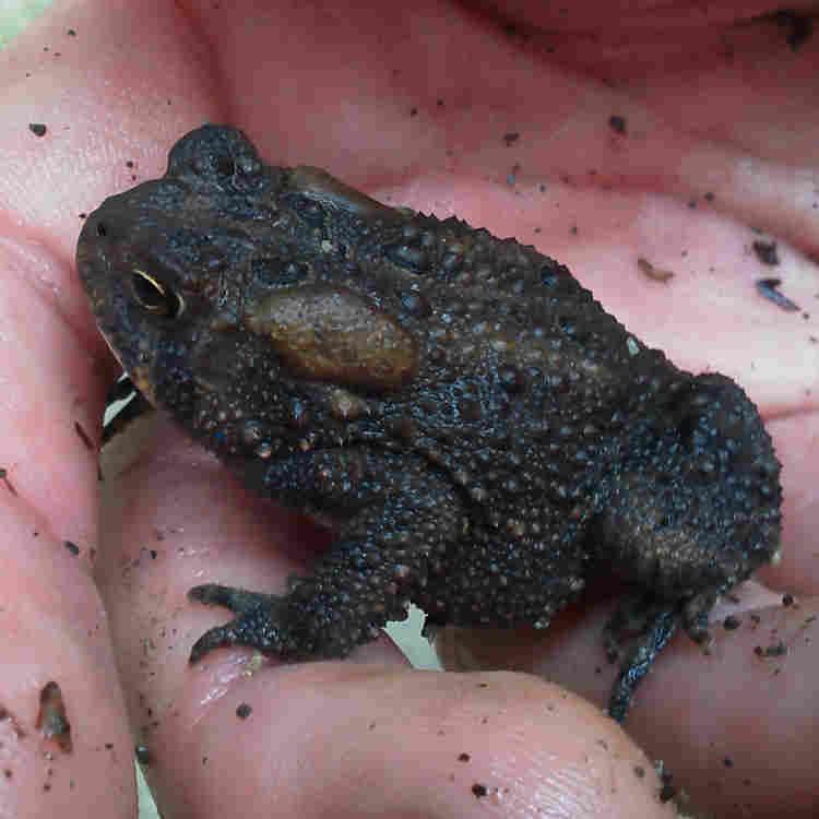Frog-app